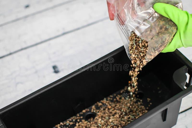 Kobiet ręki w zielonych rękawiczkach nalewają drenaż w plastikowego zbiornika Przygotowanie ziarna dla zasadzać w ziemi zdjęcia royalty free