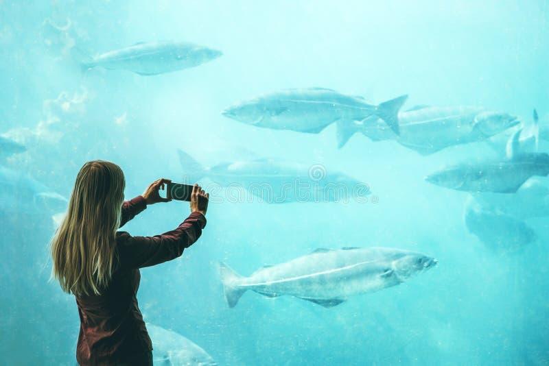 Kobieta bierze fotografię smartphone ryba w dużym akwarium zdjęcia stock