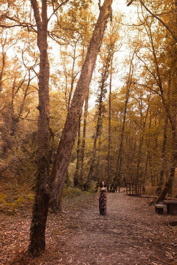 kobieta chodzi przez drewien w jesieni obraz stock