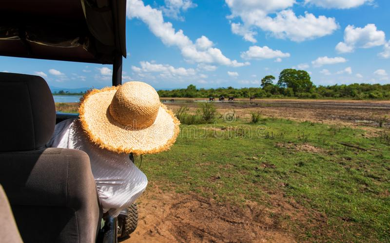 Kobieta cieszy się widok od safari ciężarówki zdjęcia royalty free