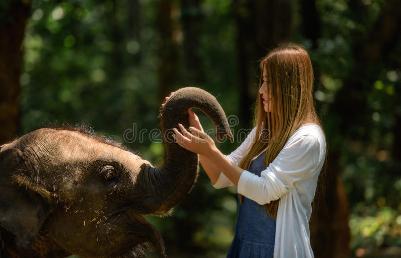 Kobieta dotyka słoń z wszystkie jej sercem zdjęcie stock