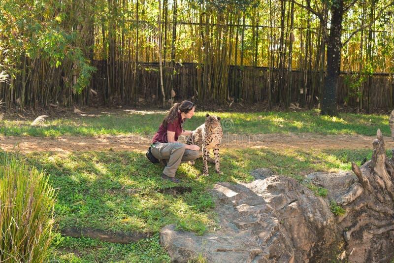 Kobieta gepard na zielonej łące przy Bush ogródami Zatoka Tampa i trener obrazy stock