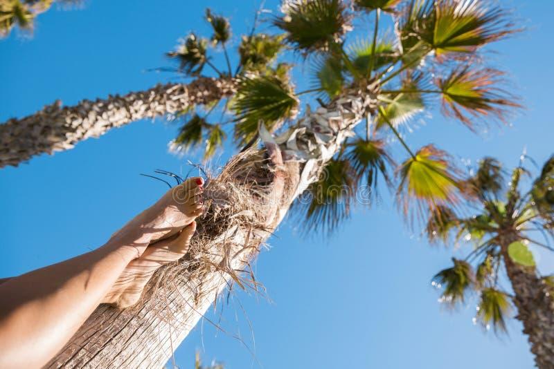 Kobieta iść na piechotę opierać przeciw palmie fotografia royalty free