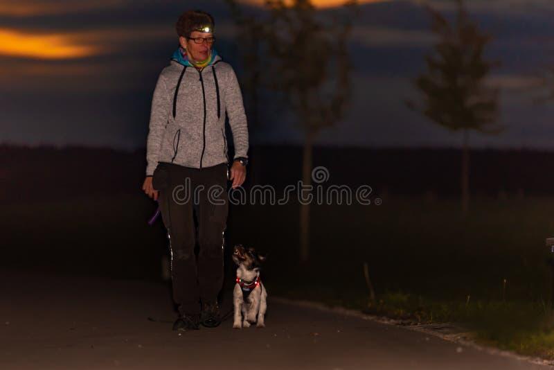 Kobieta iść z psim odprowadzeniem w jesieni przy nocą z słuchającą pochodnią - dźwigarki Russell terier zdjęcie royalty free