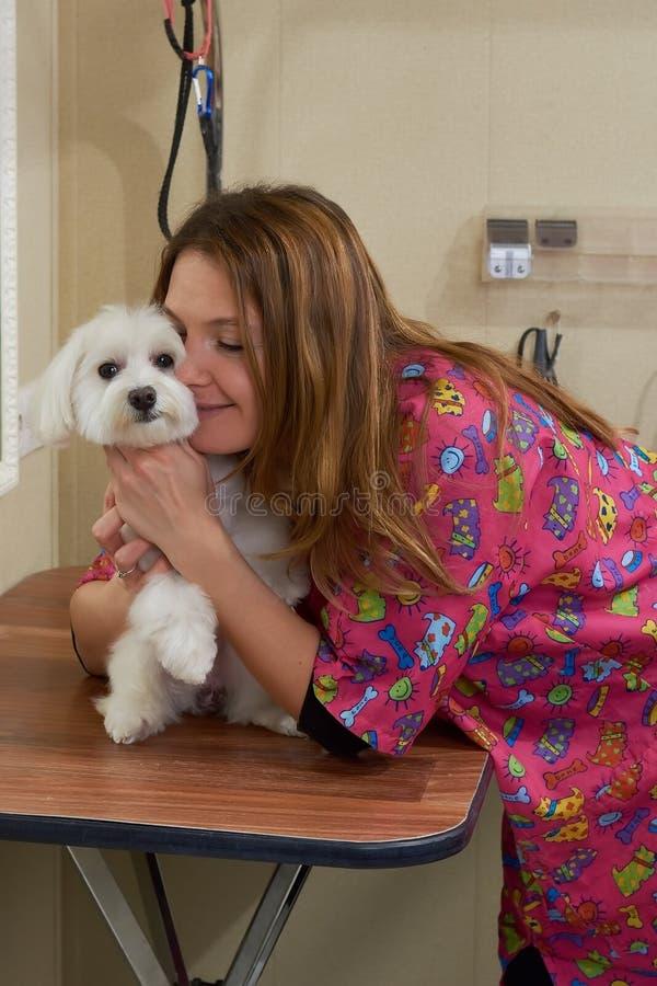 Kobieta i biały maltese pies fotografia stock