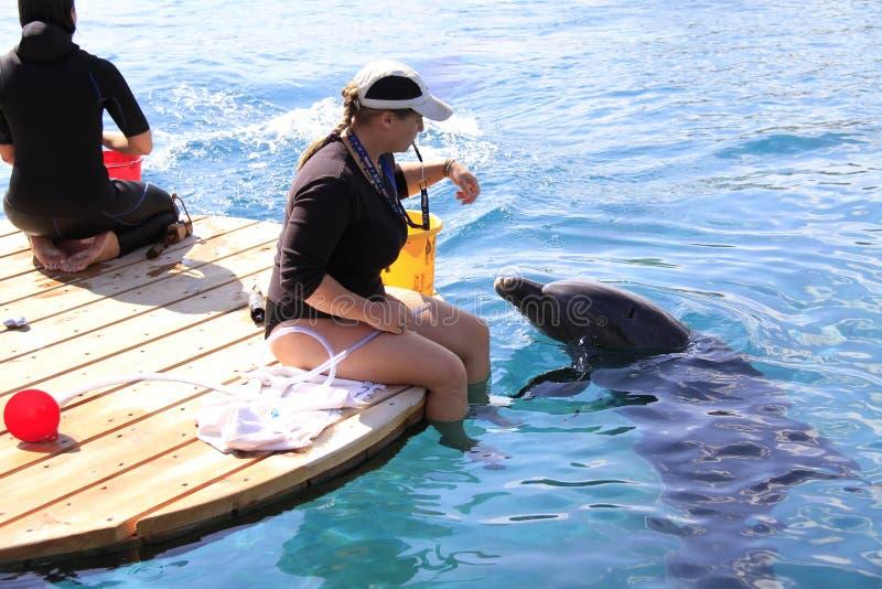 Kobieta i delfin w wodzie obrazy royalty free