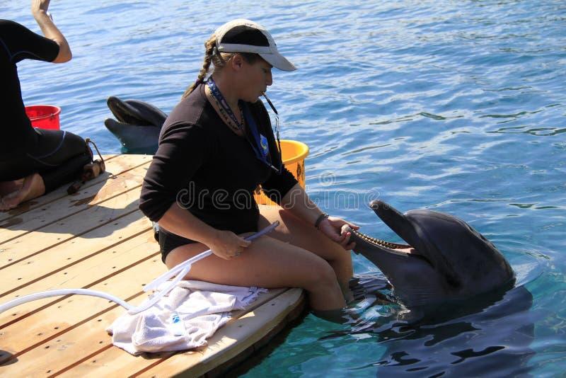 Kobieta i delfin w wodzie obraz stock