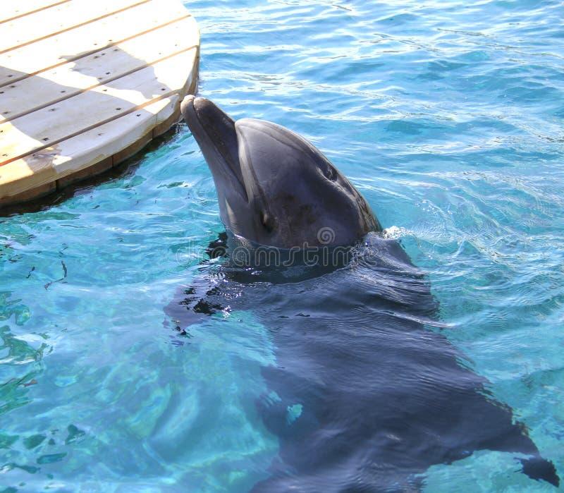 Kobieta i delfin w wodzie zdjęcia royalty free
