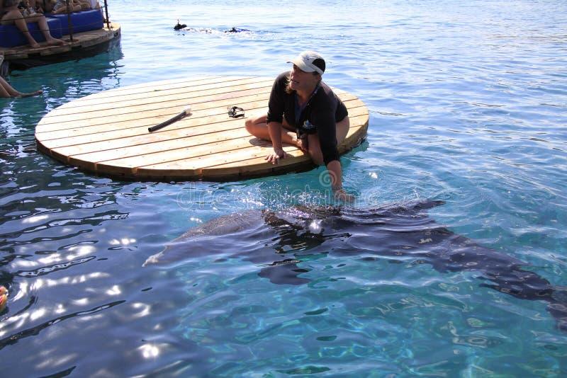 Kobieta i delfin w wodzie zdjęcie royalty free