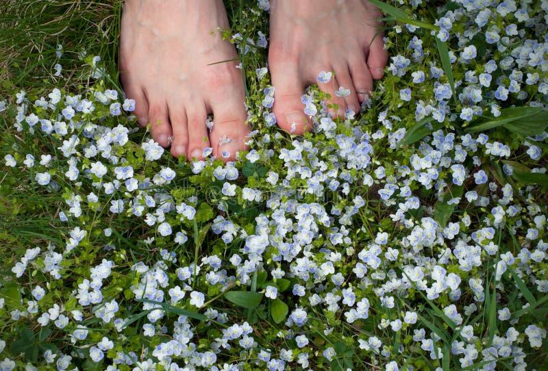 Kobieta i?? na piechot? na polu z ma?ymi b??kitnymi kwiatami Kobieta nadzy cieki na wiosny trawie kwiatu polu i zdjęcie stock