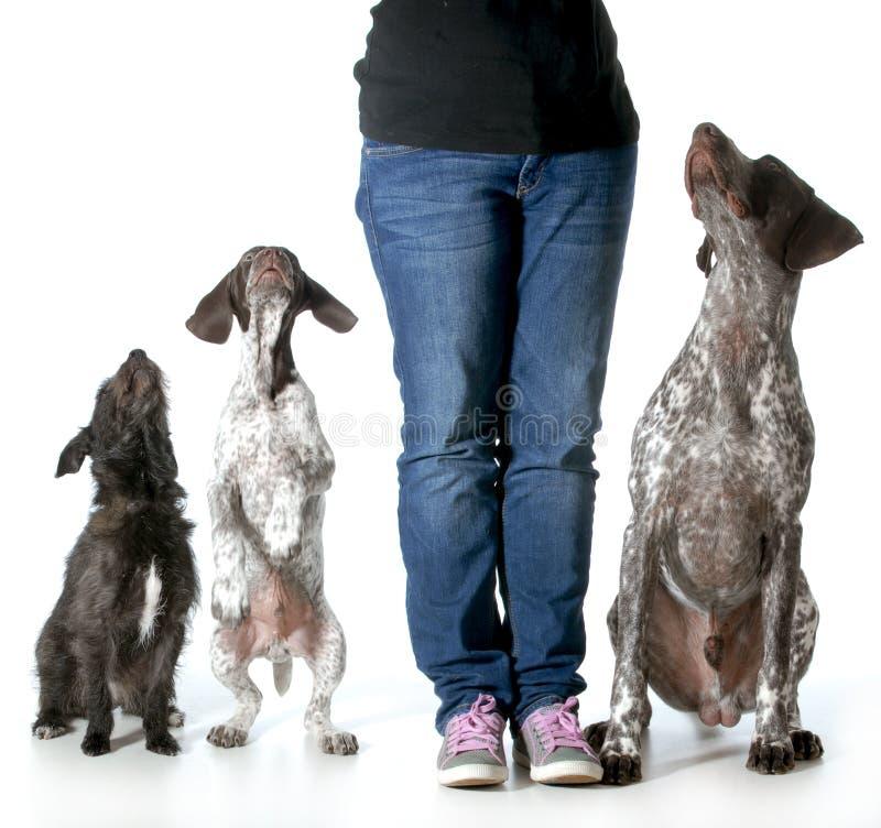 Kobieta i ona psy zdjęcia stock