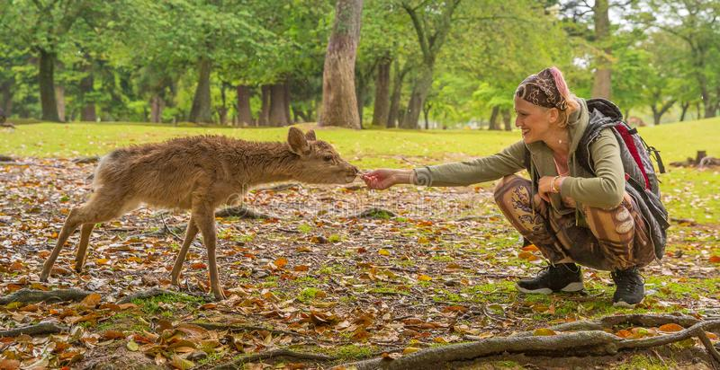 Kobieta karmi Nara rogacza obrazy stock