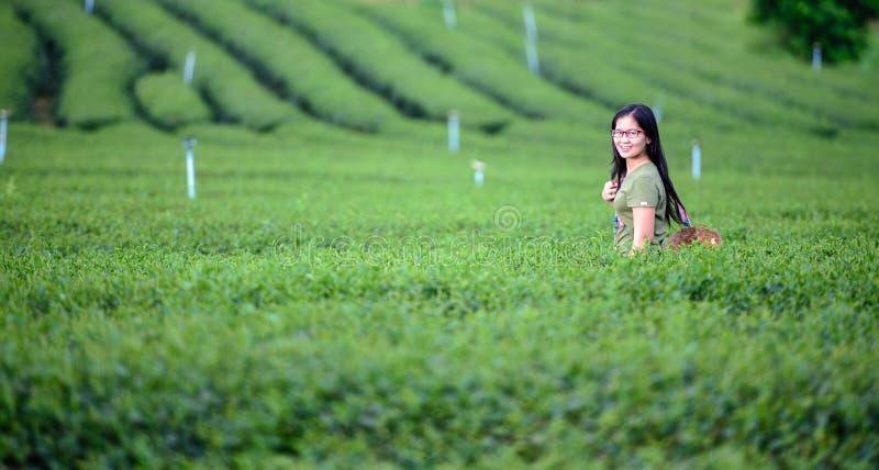 Kobieta na Herbacianej plantaci w wzgórze dolinie fotografia royalty free