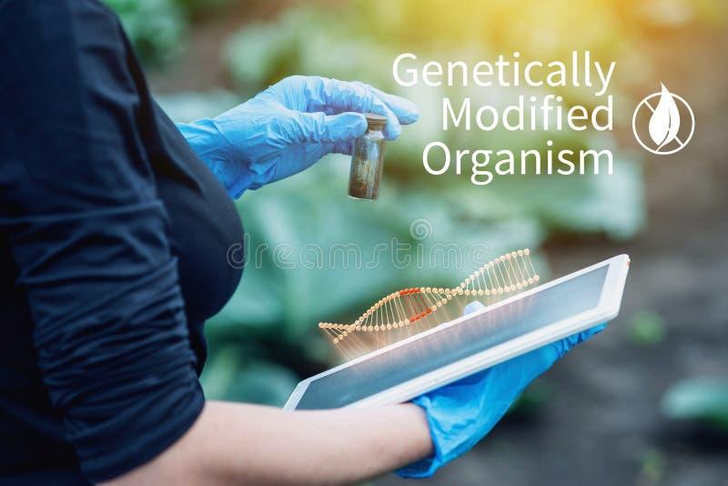 Kobieta naukowa genetyczny inżynier bada rośliny dla obecności genetyczna modyfikacja Organizmy zanieczyszczający z GMO obraz stock