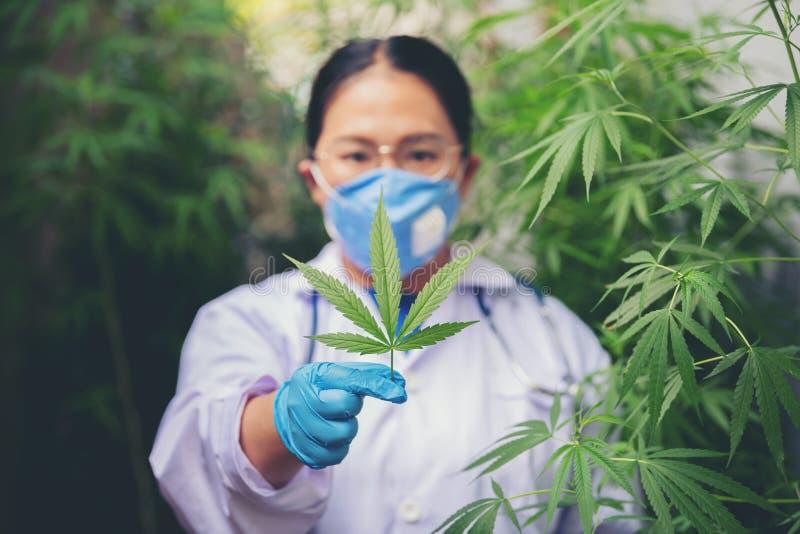 Kobieta-naukowcy sprawdzają liście marihuany fotografia stock