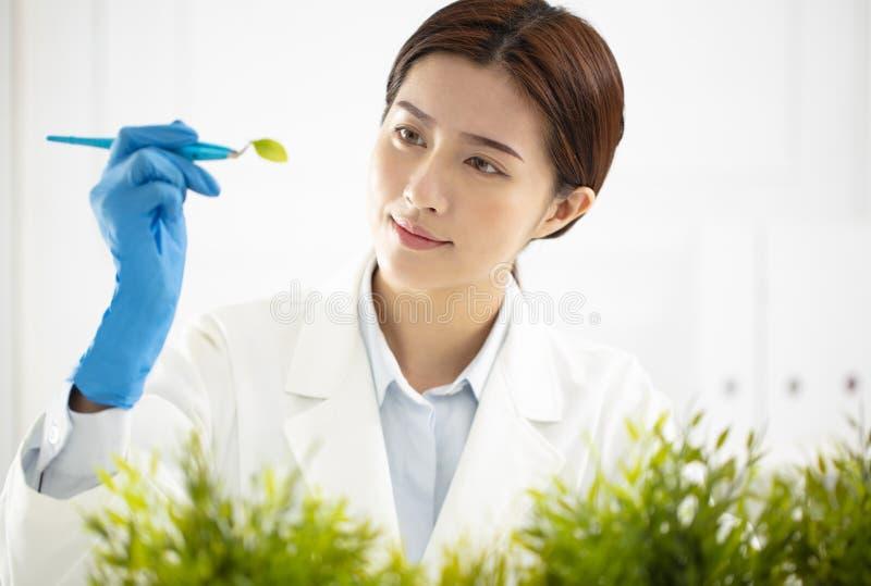Kobieta naukowiec ogląda rośliny obraz royalty free