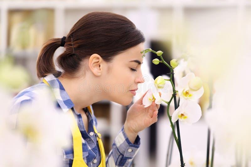 Kobieta odory i dotyki orchidea obraz stock