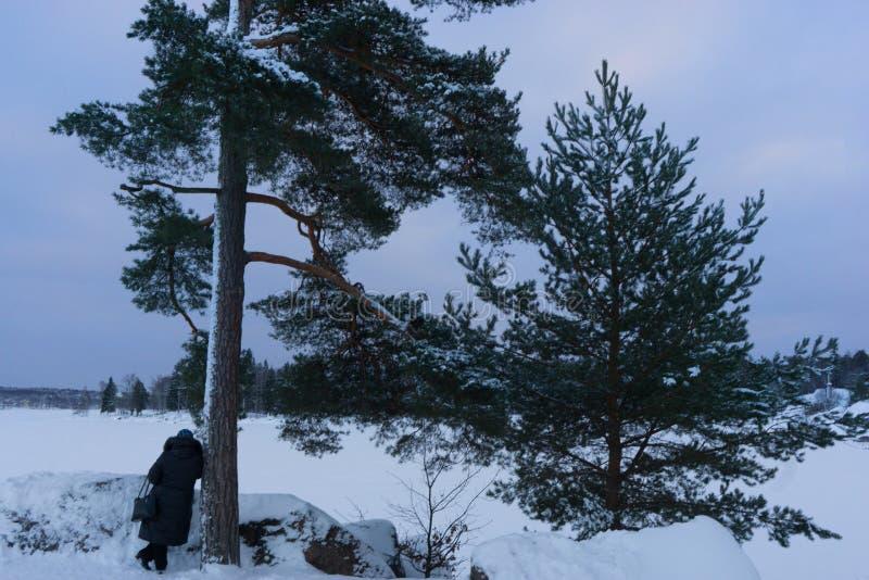 Kobieta opierająca przeciw sośnie i podziwia piękno zatoka Finlandia VYBORG, ROSJA 05 01 2019 Jak obrazy royalty free