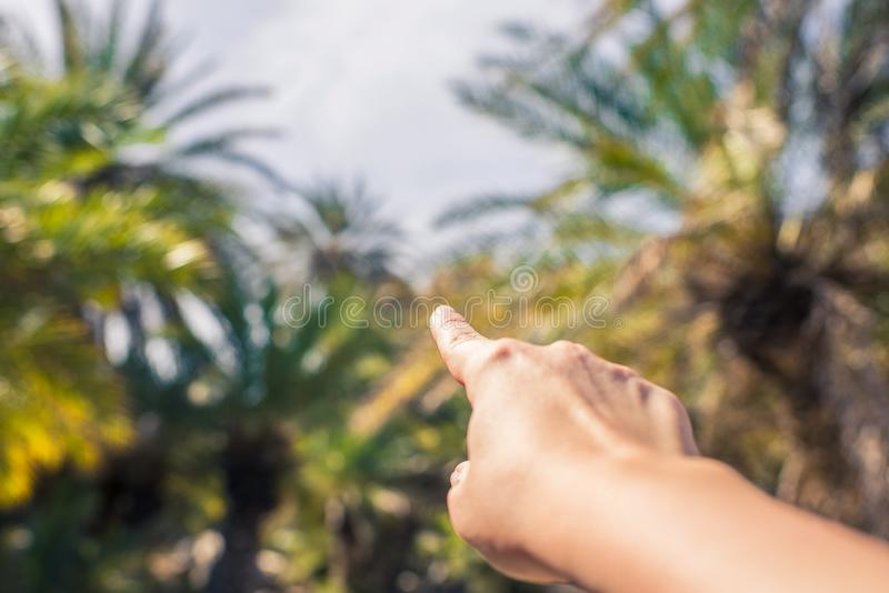 Kobieta palcowy seans na drzewkach palmowych Podr??y r?ka Seychelles wyspy fotografia royalty free
