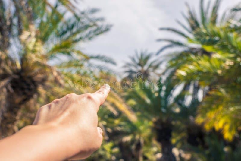 Kobieta palcowy seans na drzewkach palmowych Podr??y r?ka Seychelles wyspy zdjęcie stock