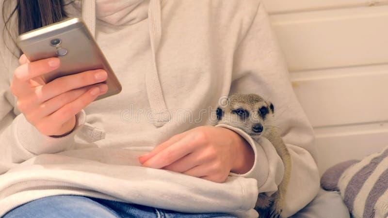 Kobieta pisać na maszynie wiadomość na telefonu obsiadaniu w dzieciak sztuki domu przytulenia meerkat _ zdjęcie royalty free