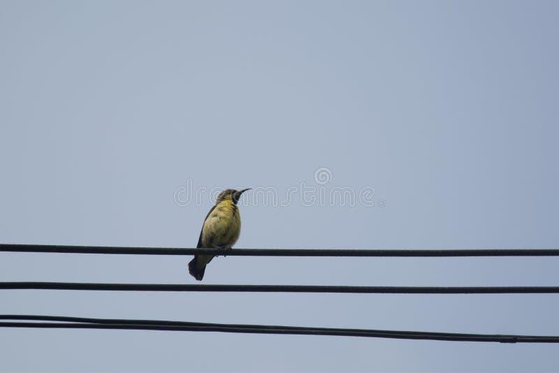 Download Kobieta Popierający Sunbird Zdjęcie Stock - Obraz złożonej z piękno, curved: 57670802