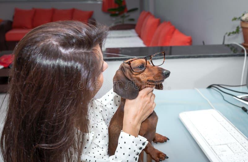 Download Kobieta Pracuje Na Komputerowym Whit Psie Obraz Stock - Obraz złożonej z officemates, kobieta: 41954695