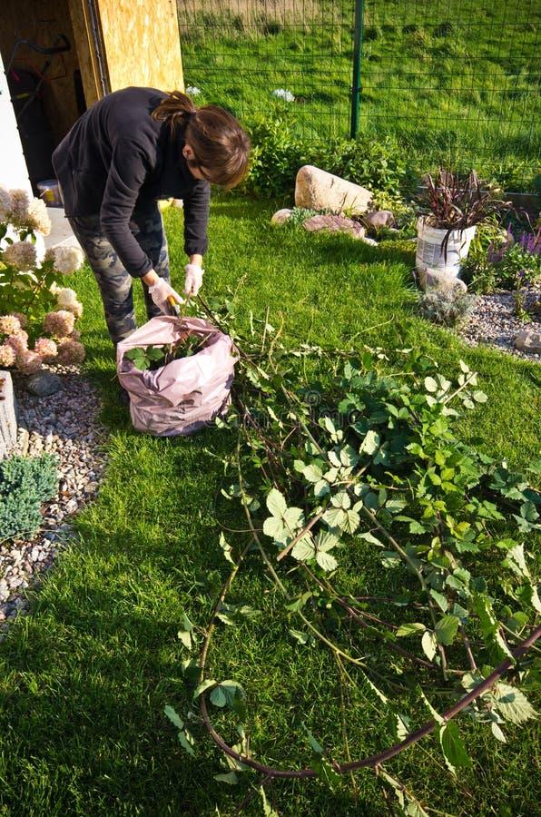 Kobieta pracuje w ogródzie, tnące nadmierne gałązki rośliny fotografia royalty free