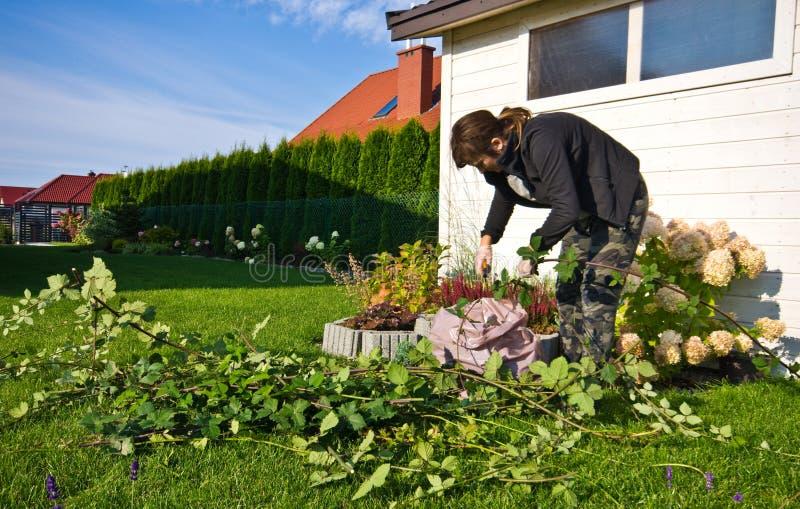 Kobieta pracuje w ogródzie, tnące nadmierne gałązki rośliny obraz stock
