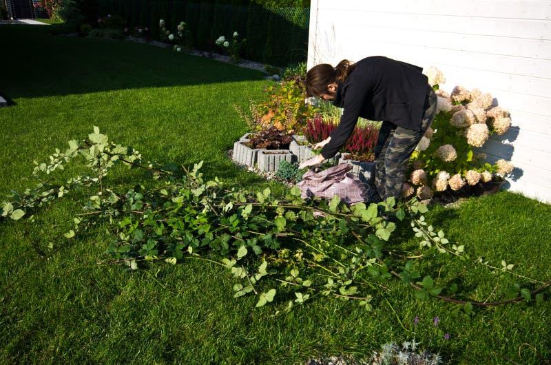 Kobieta pracuje w ogródzie, tnące nadmierne gałązki rośliny zdjęcie royalty free
