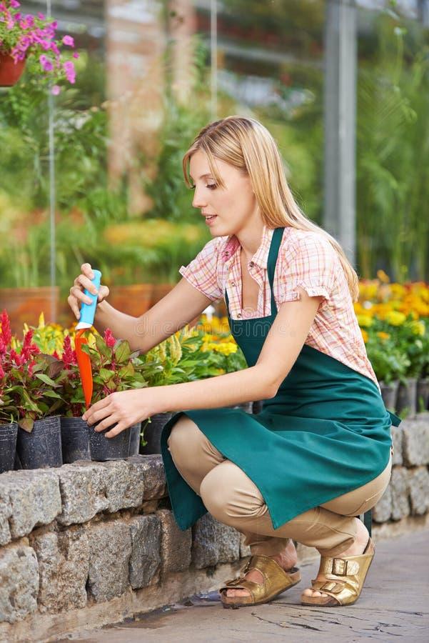 Kobieta pracuje w ogródzie w wiośnie obrazy stock