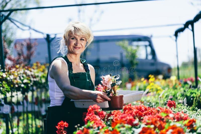 Kobieta pracuje w ogrodnictwa centrum zdjęcia royalty free