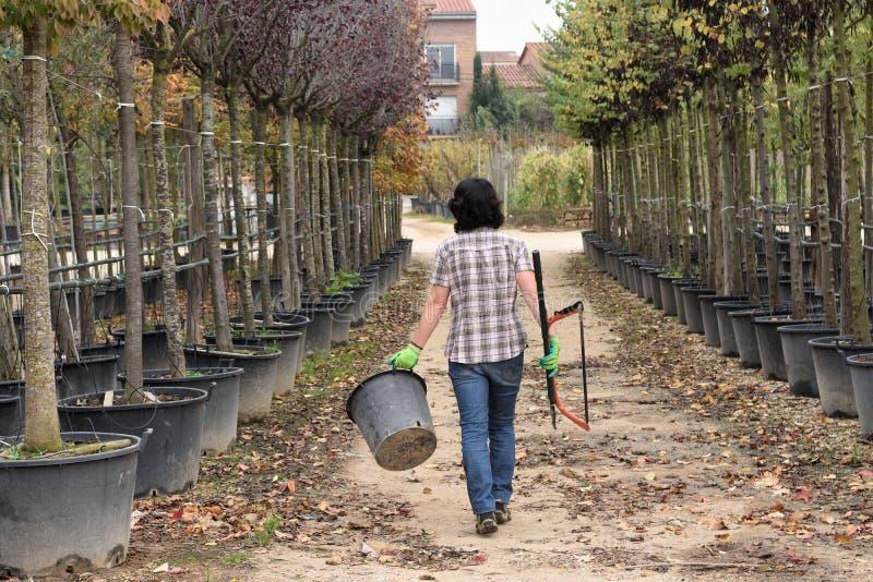 Kobieta pracuje w ogrodowym centrum, fotografia stock