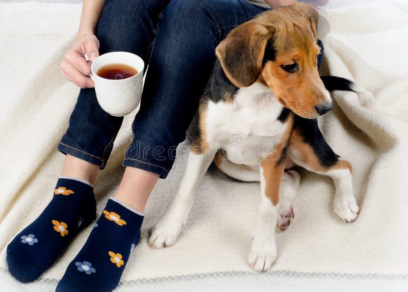 Kobieta relaksuje z beagle herbatą i szczeniakiem obrazy stock
