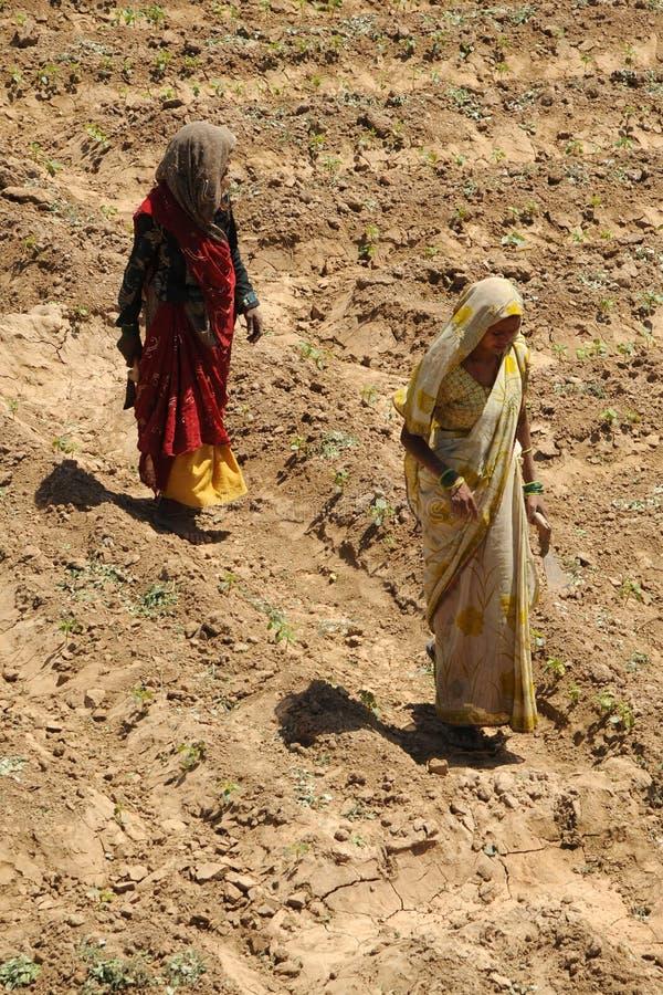 Kobieta rolnicy, Fatehpur Sikri, India. zdjęcie royalty free
