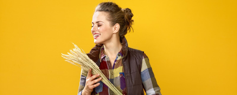 Kobieta rolnik na żółtym tle cieszy się pszenicznych spikelets fotografia royalty free