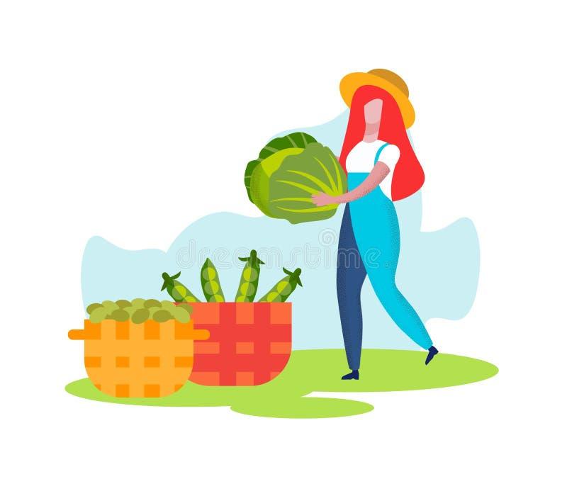 Kobieta rolnik Niesie kapusty kosz, Zbiera ilustracji