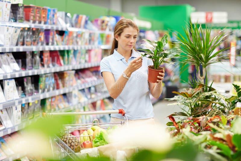 Kobieta sprawdza ilość garnek roślina zdjęcie royalty free