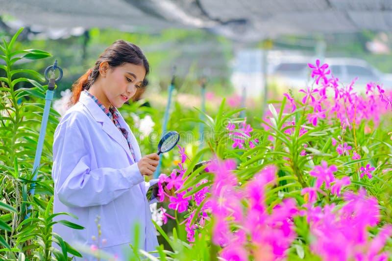 Kobieta Storczykowi badacze są rekonesansowi i dokumentujący właściwości orchidee w ogródzie obraz royalty free