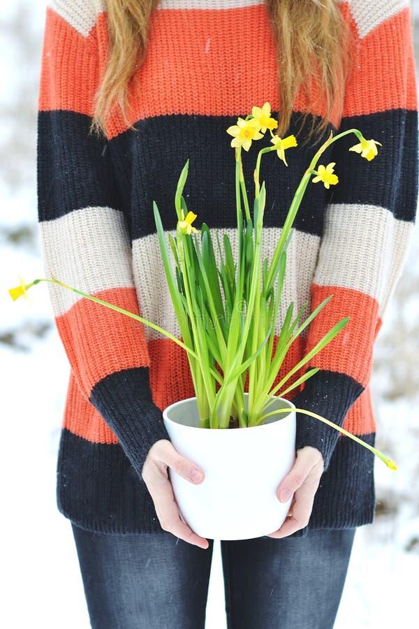 Kobieta Trzyma Białego kwiatu garnek z Daffodil zimy Śnieżnym lasem zdjęcia stock