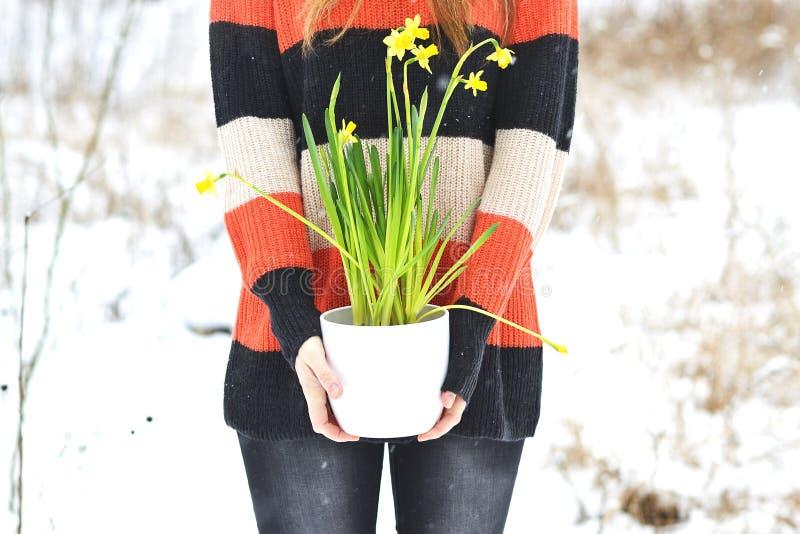 Kobieta Trzyma Białego kwiatu garnek z Daffodil zimy Śnieżnym lasem obrazy royalty free