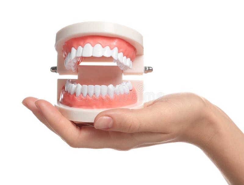 Kobieta trzyma edukacyjnego modela oralny zagłębienie z zębami obraz royalty free
