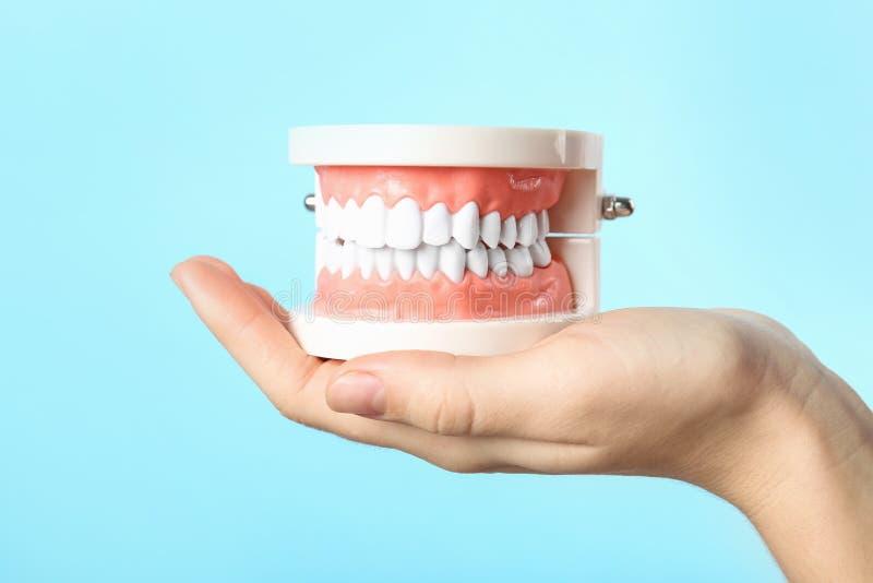 Kobieta trzyma edukacyjnego modela oralny zagłębienie z zębami obrazy stock