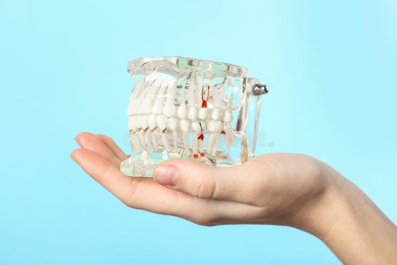 Kobieta trzyma edukacyjnego modela oralny zagłębienie z zębami obrazy royalty free
