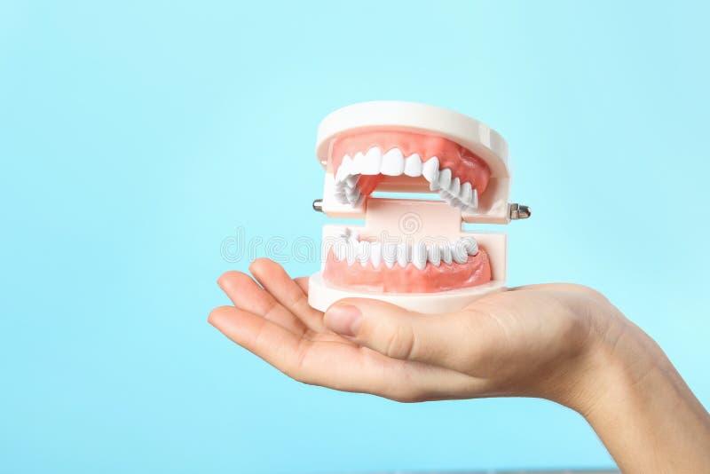 Kobieta trzyma edukacyjnego modela oralny zagłębienie z zębami na koloru tle obrazy stock