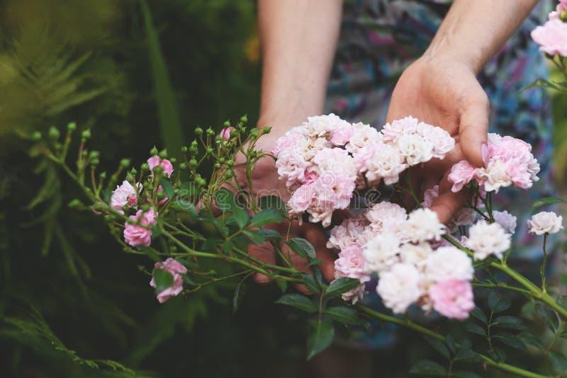 Kobieta trzyma pięknego menchii róży kwiatu w ona ręki siedzi w kwitnącym lato ogródzie obraz royalty free