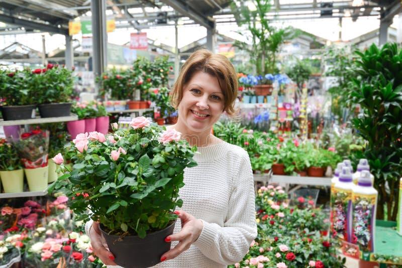 Kobieta trzymający kwiaty pracuje w agreenhouse przy ogrodowym centrum zdjęcia stock