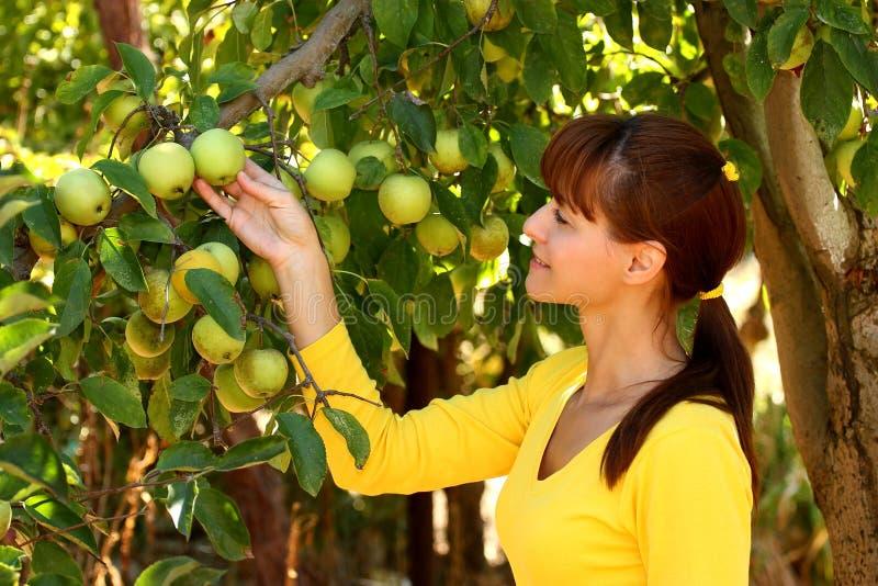 Kobieta w jabłko ogródzie obrazy stock
