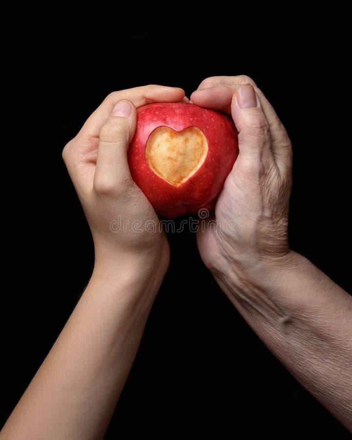 Kobieta wręcza mienia jabłka zdjęcia royalty free