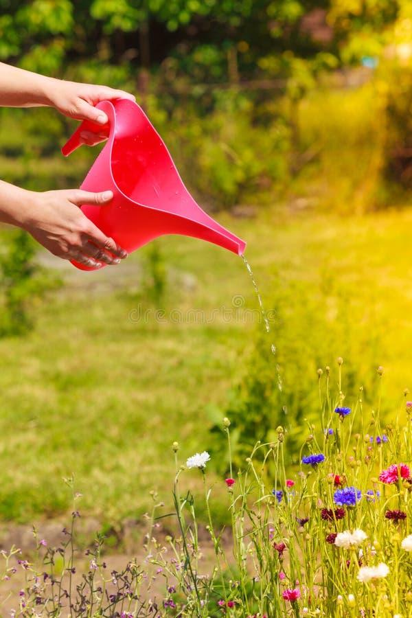Kobieta wręcza podlewanie rośliny w ogródzie obraz stock